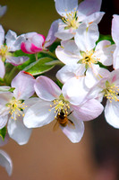 Bees&Blossoms_ 4 (1)