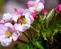 Bees&Blossoms_ 31